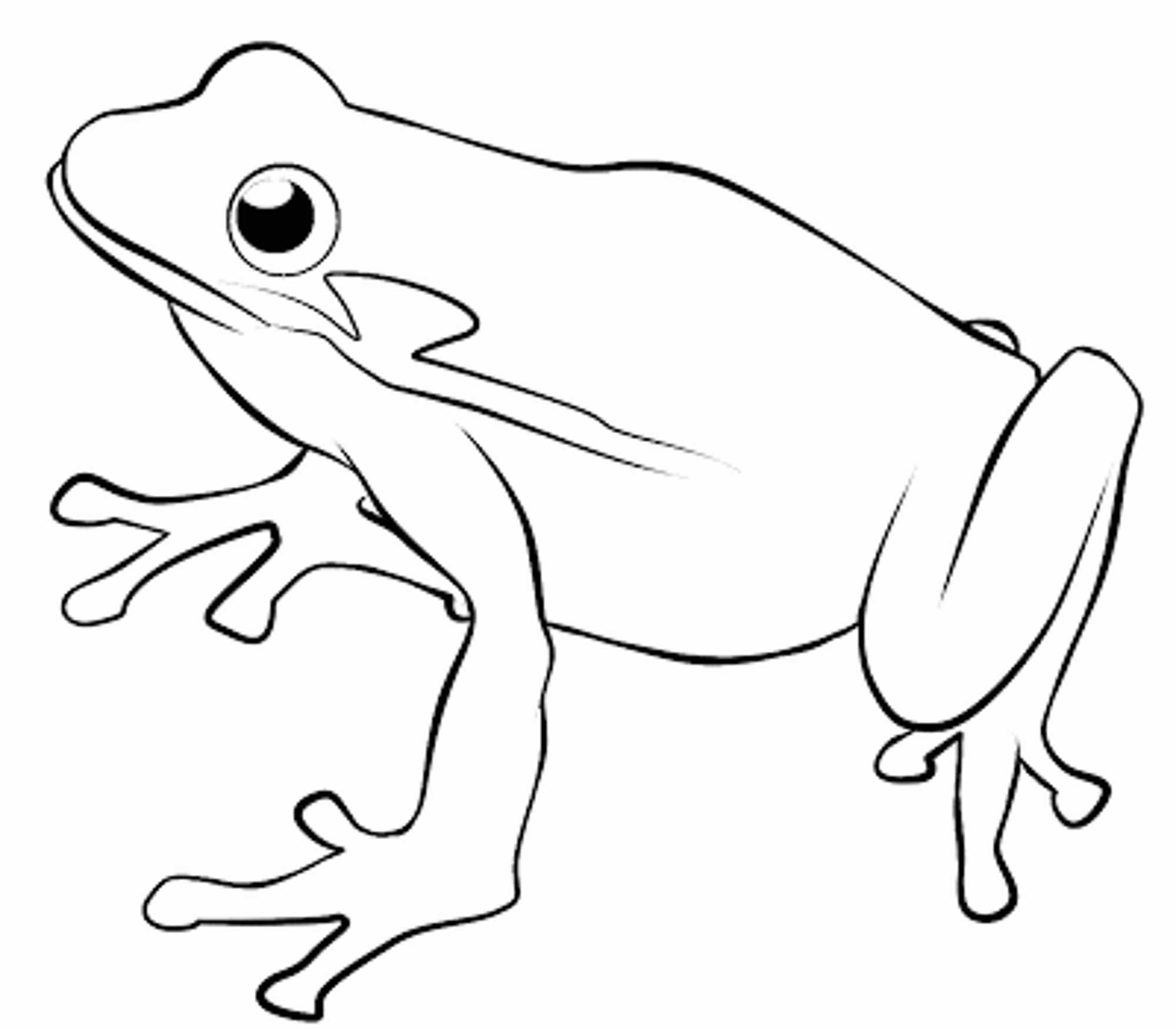 frog to color cute frog coloring pages coloring home to frog color