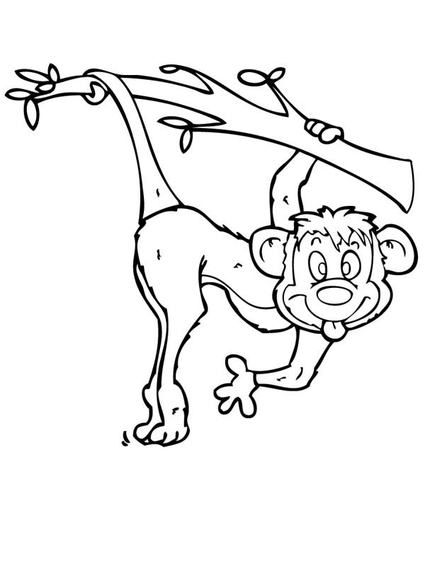 funny coloring pictures funny cat pics for kids coloring home pictures coloring funny