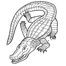 gator coloring sheets alligator coloring pages coloring sheets gator