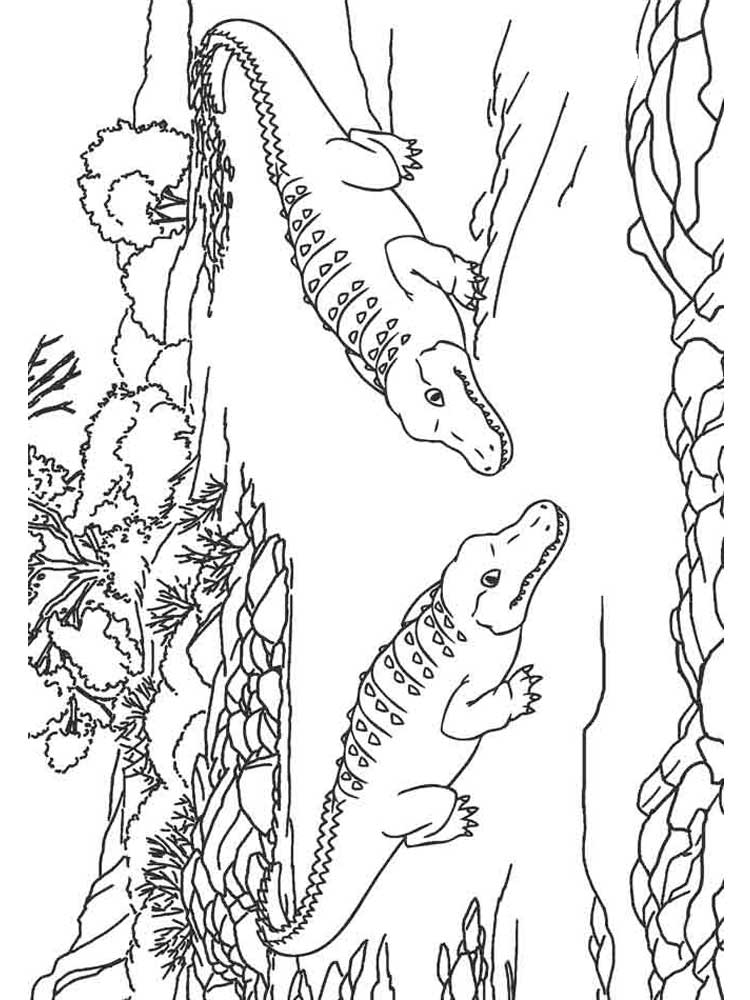 gator coloring sheets free alligator coloring pages download and print deer gator coloring sheets