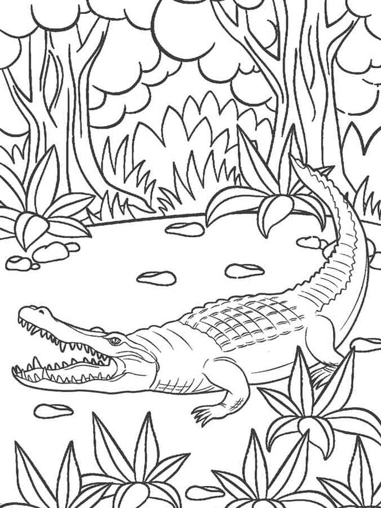 gator coloring sheets free alligator coloring pages download and print deer sheets coloring gator