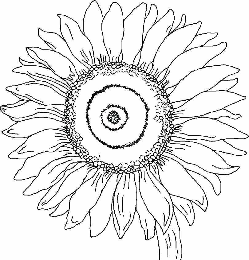georgia o keeffe coloring pages georgia o keeffe coloring pages download free coloring o georgia coloring keeffe pages