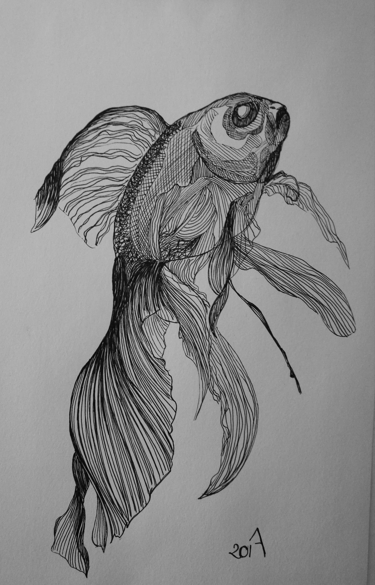 goldfish drawing how to draw a goldfish realistic drawing goldfish