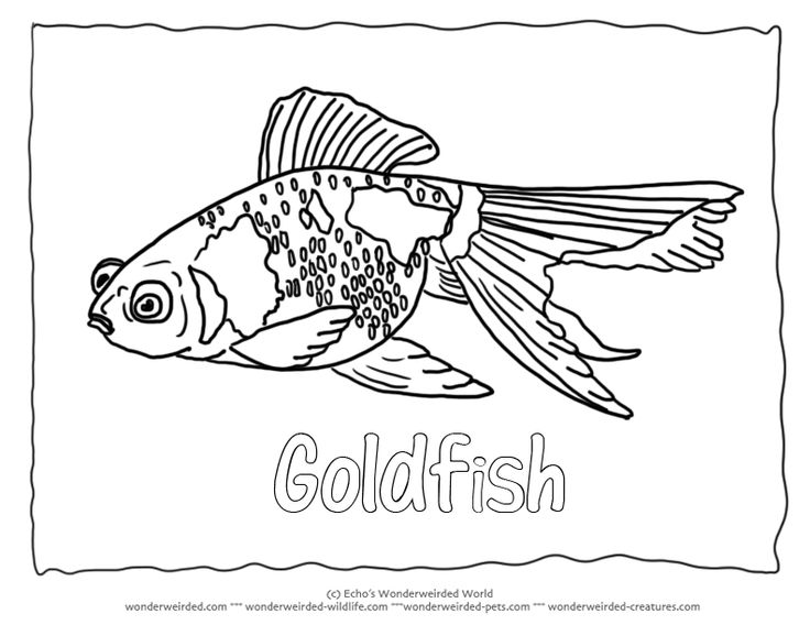 goldfish outline goldfish coloring pages getcoloringpagescom outline goldfish