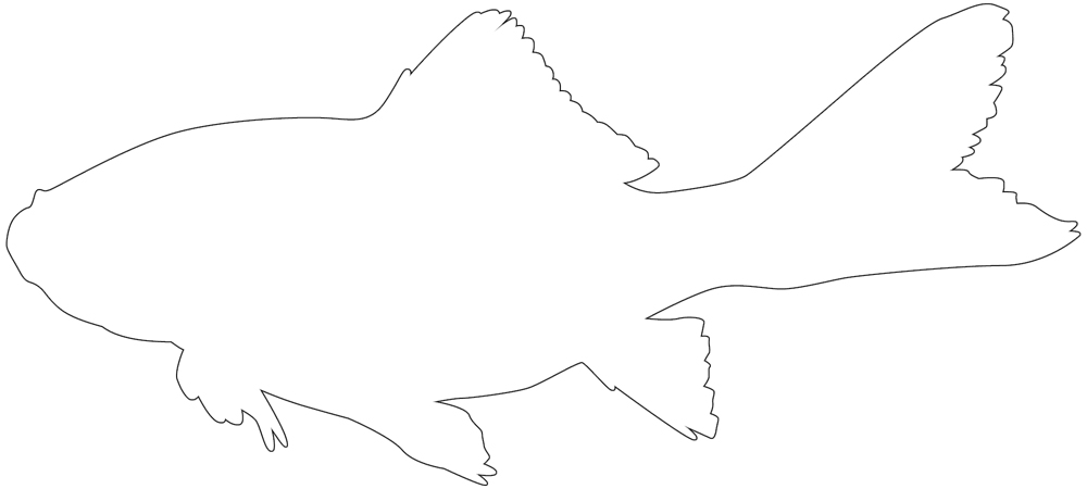 goldfish outline goldfish outline awesome free printable template outline goldfish