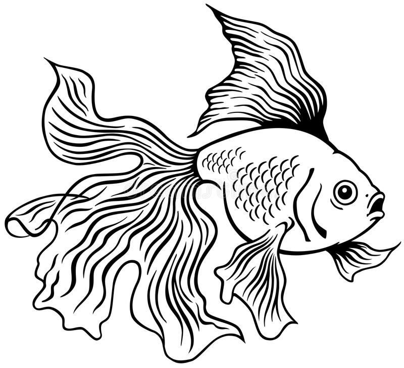 goldfish outline train to draw goldfish outline draw it yourself outline goldfish