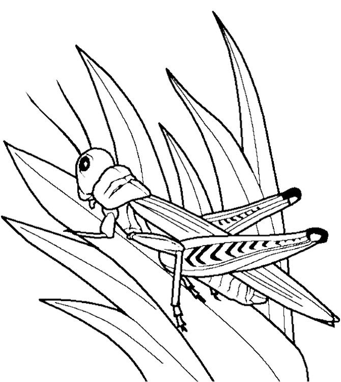 grasshopper pictures for kids grasshopper coloring pages with basic instructions 애니메이션 pictures grasshopper kids for