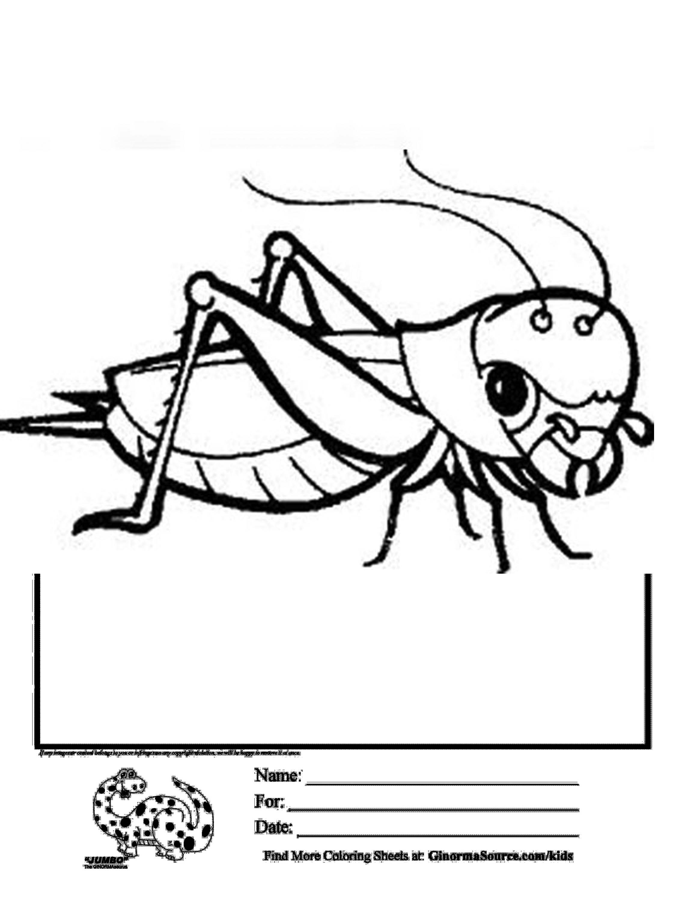grasshopper pictures for kids grasshopper drawing for kids at getdrawings free download for grasshopper pictures kids