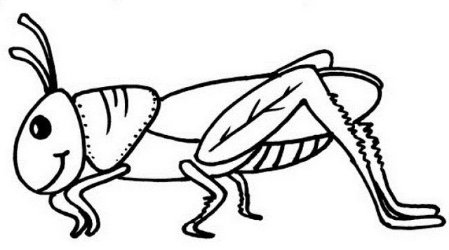 grasshopper pictures for kids grasshopper insect bug coloring pages kids coloring grasshopper kids for pictures