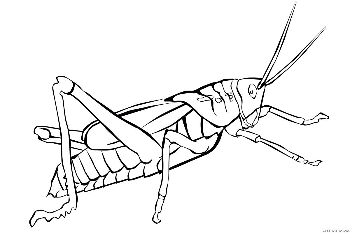 Grasshopper pictures for kids