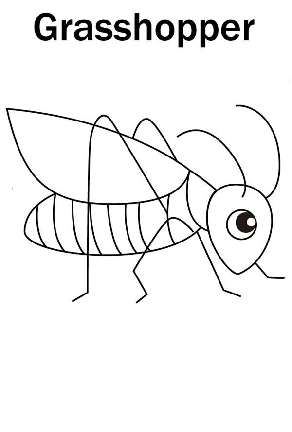 grasshopper pictures for kids grasshoppers coloring pages learny kids for pictures grasshopper kids
