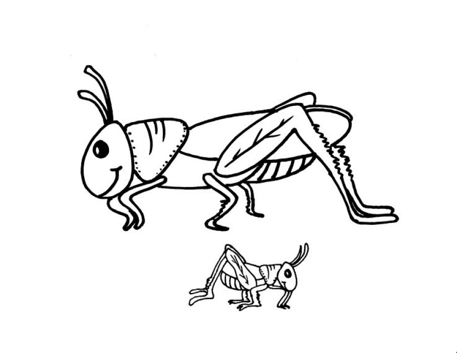 grasshopper pictures for kids grasshoppers coloring pages to download and print for free kids grasshopper pictures for