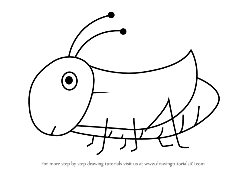 grasshopper pictures for kids learn how to draw a grasshopper for kids animals for kids pictures kids grasshopper for