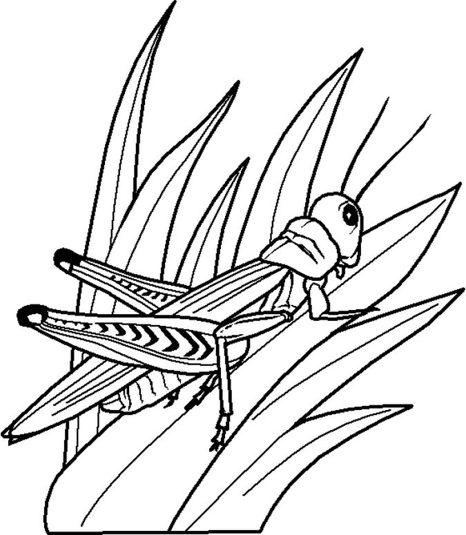 grasshopper pictures for kids locusts grasshopper coloring page kids play color grasshopper for pictures kids