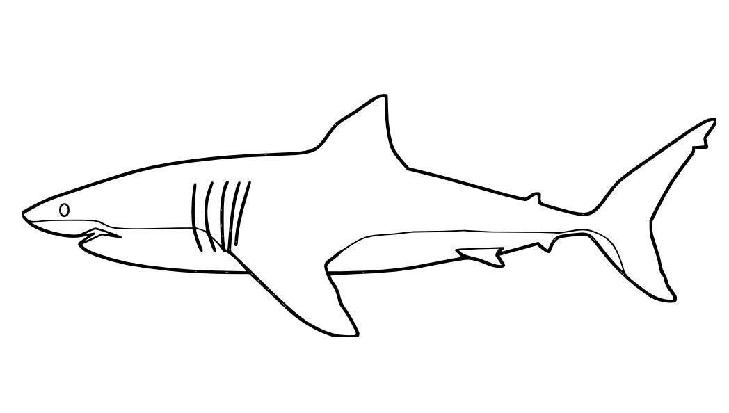great white shark coloring page great white shark coloring page with images shark page white shark great coloring