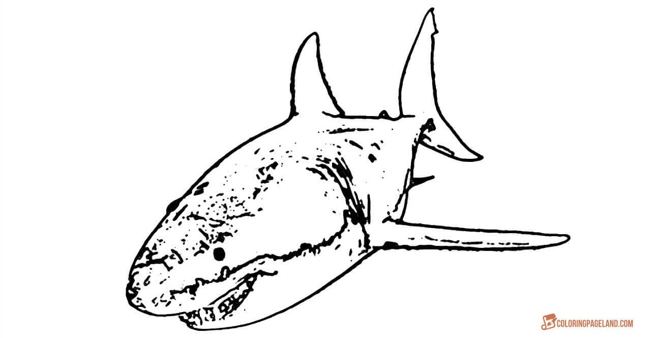 great white shark coloring page great white shark coloring pages downloadable and shark page great coloring white