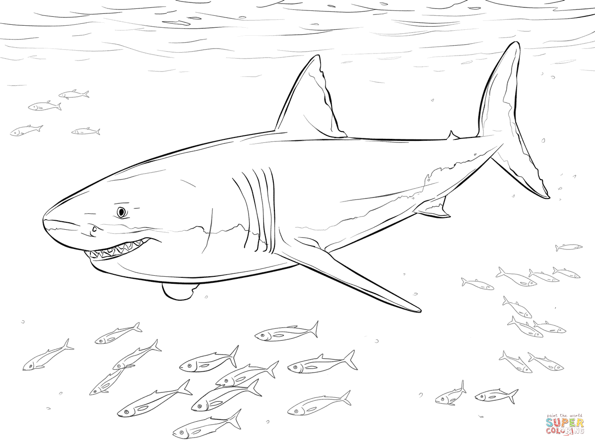 great white shark coloring page great white shark coloring pages to download and print for page coloring great white shark