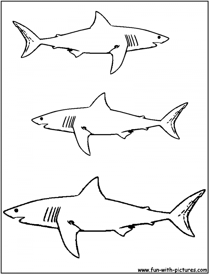 great white shark coloring page great white shark pictures to print free coloring home shark coloring white great page