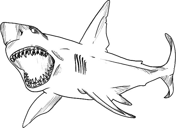 great white shark coloring page shark jaws coloring pages for kids shark jaws coloring coloring page great shark white