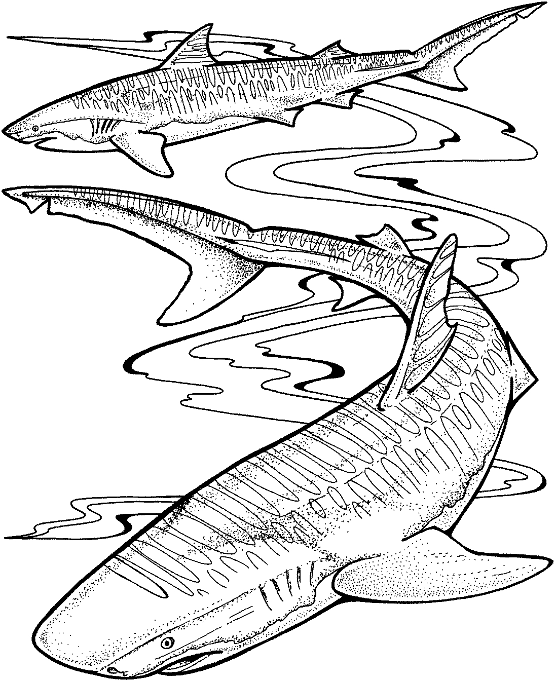 great white shark coloring page white shark coloring pages at getcoloringscom free white page shark coloring great