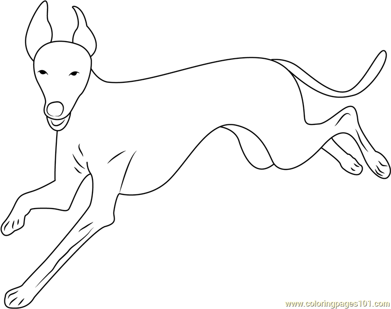 greyhound dog coloring pages funny greyhound coloring page free printable coloring pages dog greyhound pages coloring