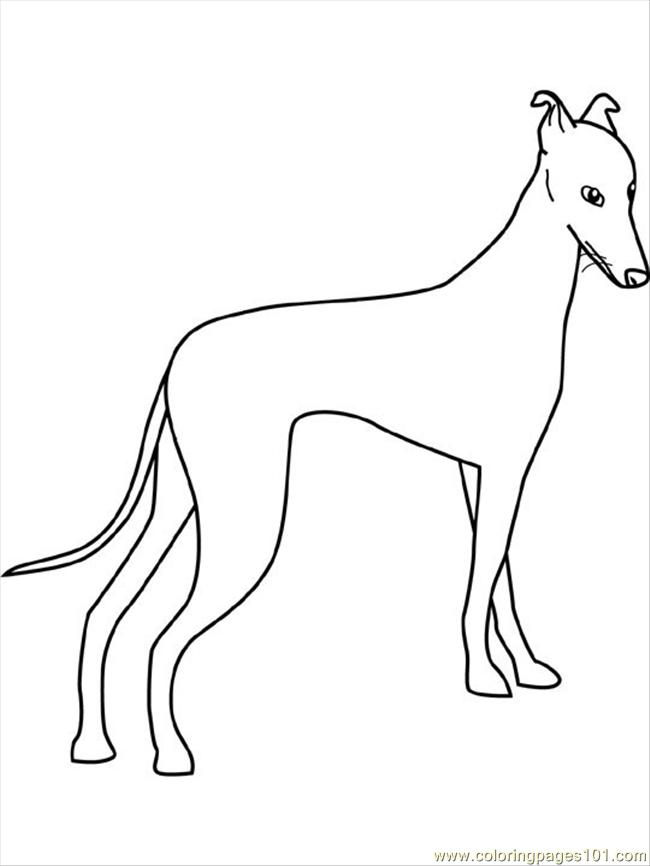 greyhound dog coloring pages greyhound 01 by kangaleer kennels on deviantart greyhound coloring pages dog