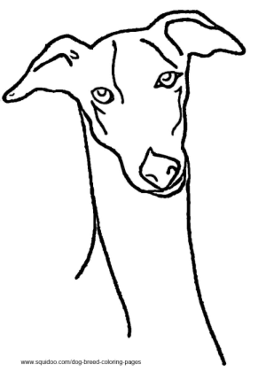 greyhound dog coloring pages greyhound coloring download greyhound coloring for free 2019 coloring greyhound dog pages