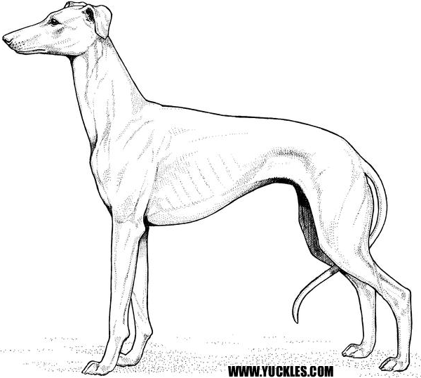 greyhound dog coloring pages greyhound coloring page at getcoloringscom free greyhound pages dog coloring