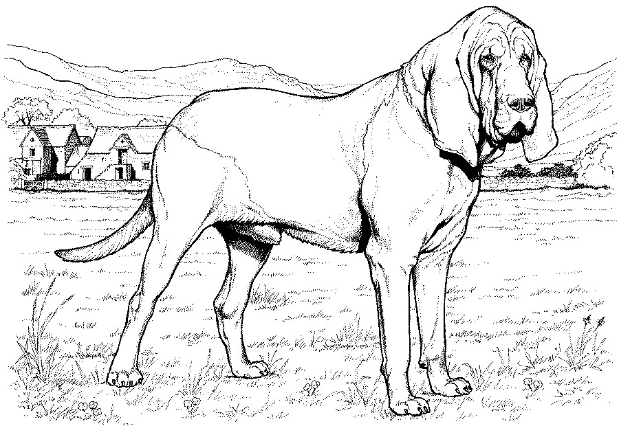 greyhound dog coloring pages greyhound coloring page coloring pages greyhound dog coloring pages