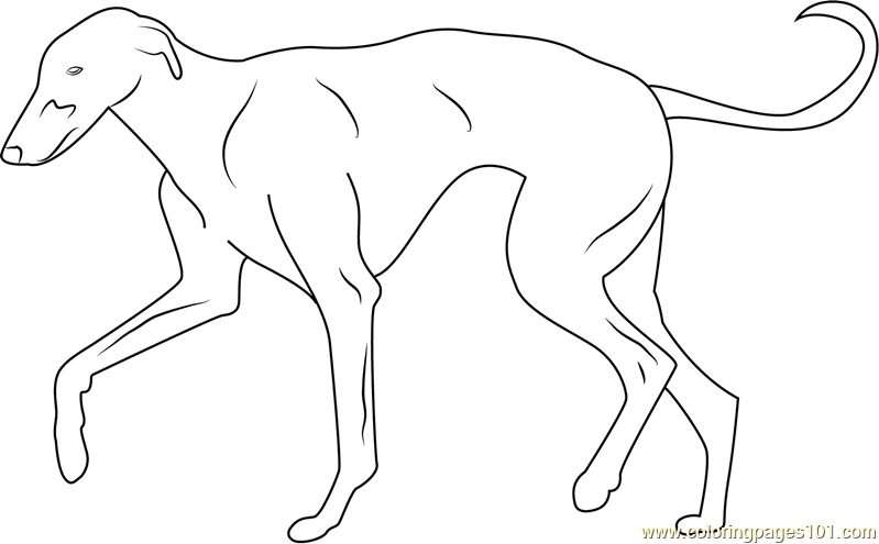 greyhound dog coloring pages greyhound coloring page greyhound pages coloring greyhound dog