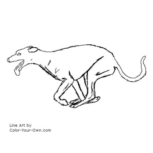 greyhound dog coloring pages italian greyhound running coloring page free dog dog greyhound pages coloring
