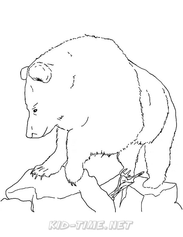 grizzly bear drawing step by step 4 grizzly bear drawings step by step coworksheets drawing step grizzly by step bear