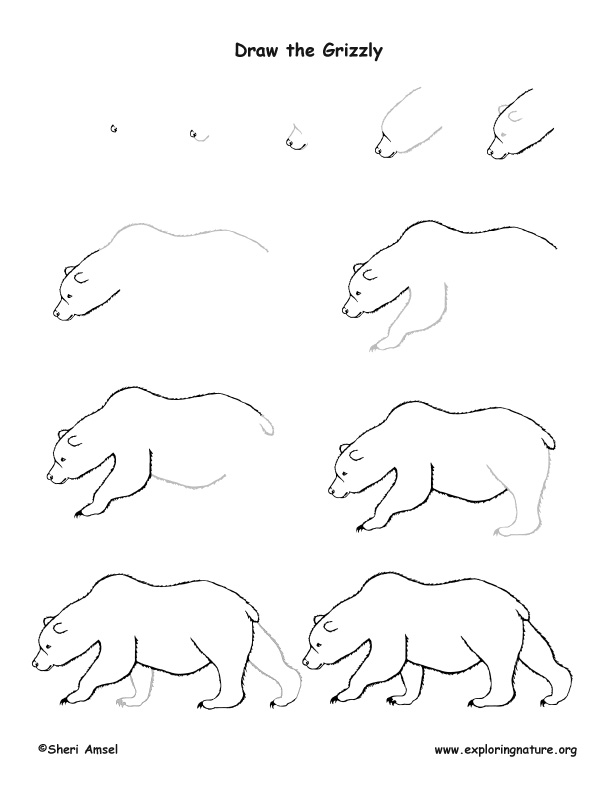grizzly bear drawing step by step 4 grizzly bear drawings step by step coworksheets step by grizzly step bear drawing