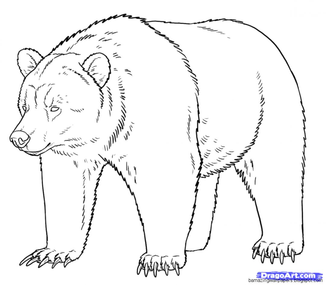 grizzly bear drawing step by step bear drawing amazing wallpapers by step grizzly step bear drawing