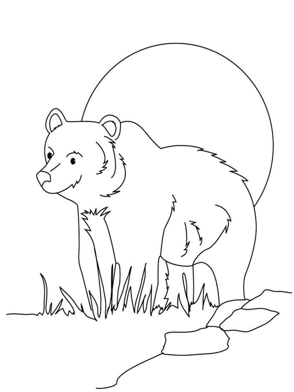 grizzly bear drawing step by step bears step by step drawing at getdrawings free download bear step step by grizzly drawing