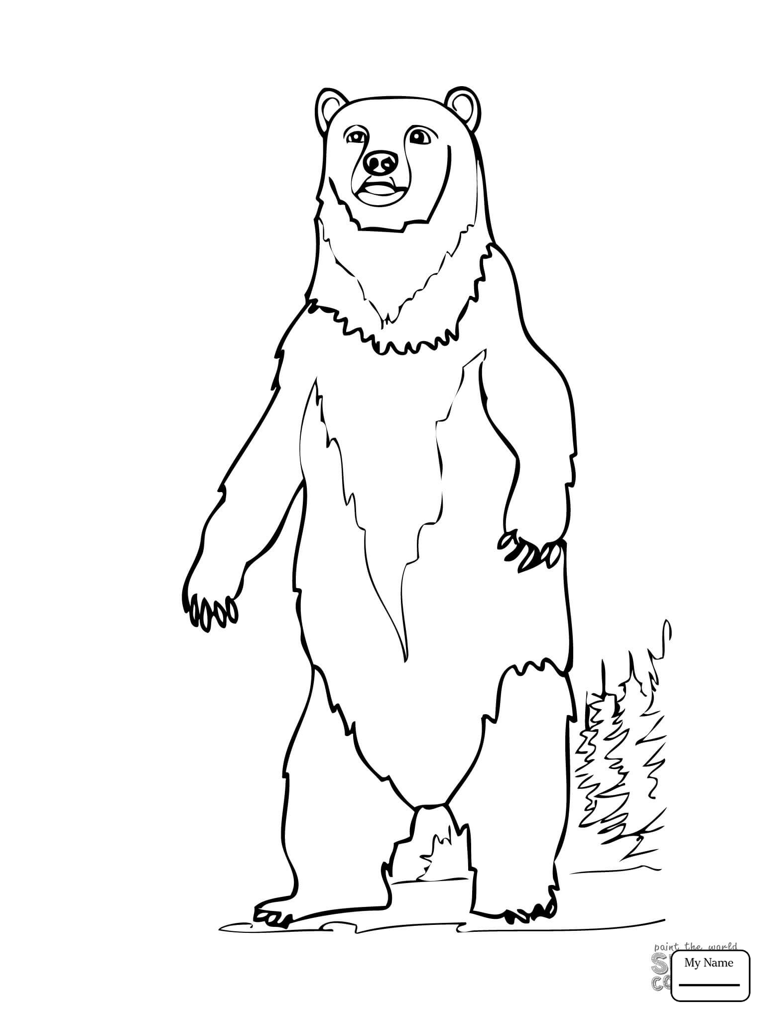 grizzly bear drawing step by step easy drawing ideas step by step bear step grizzly drawing by step