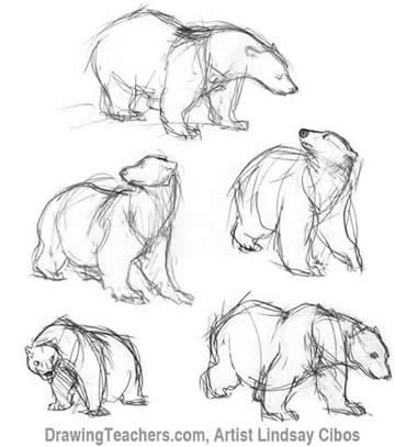 grizzly bear drawing step by step grizzly bear drawing step by step at getdrawings free by grizzly drawing bear step step