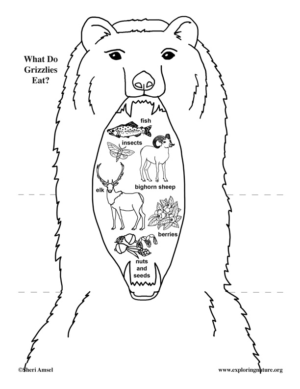 grizzly bear drawing step by step grizzly bear drawing step by step at getdrawings free drawing by grizzly step step bear