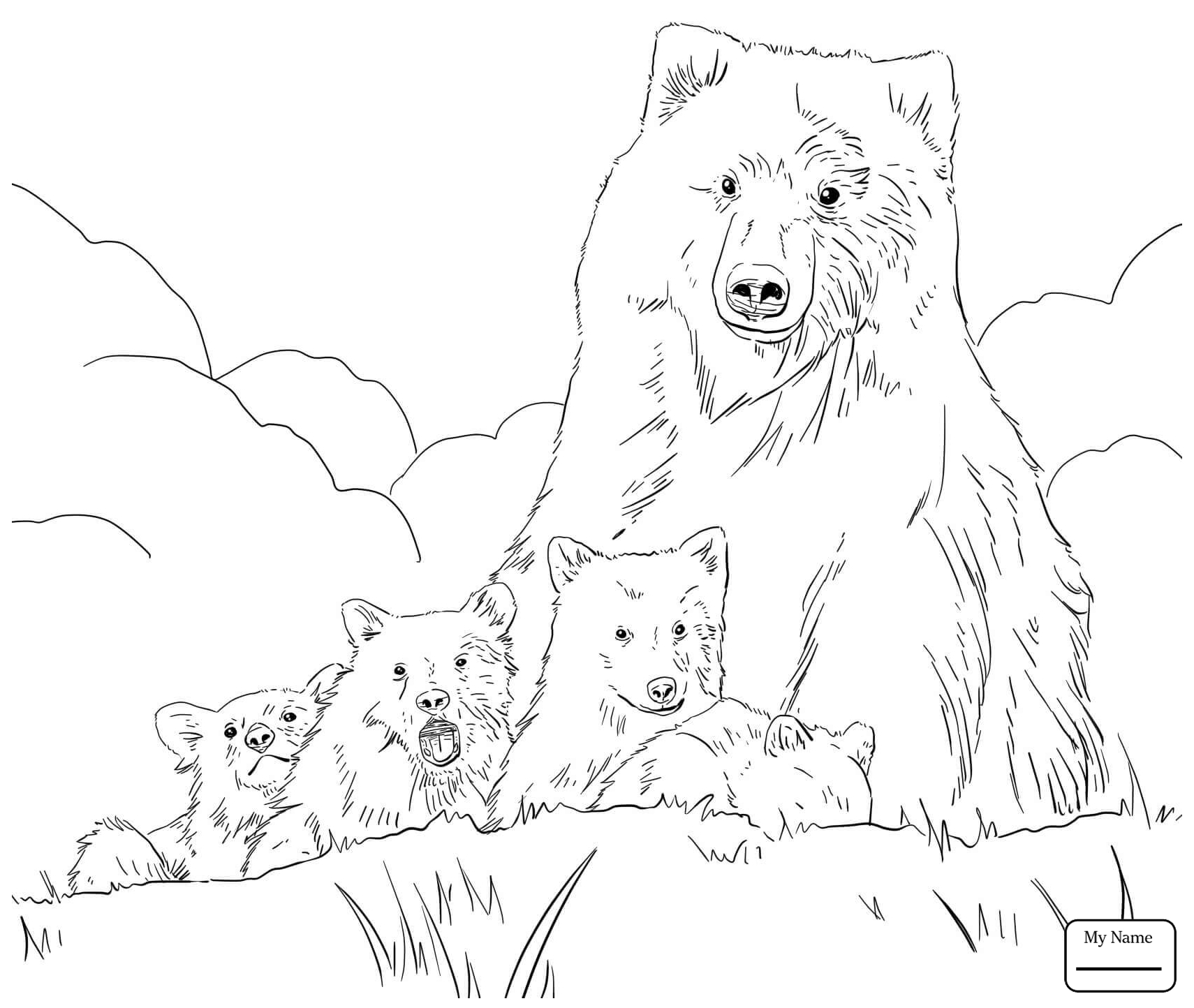 grizzly bear drawing step by step grizzly bear drawing step by step at getdrawings free grizzly by step bear step drawing