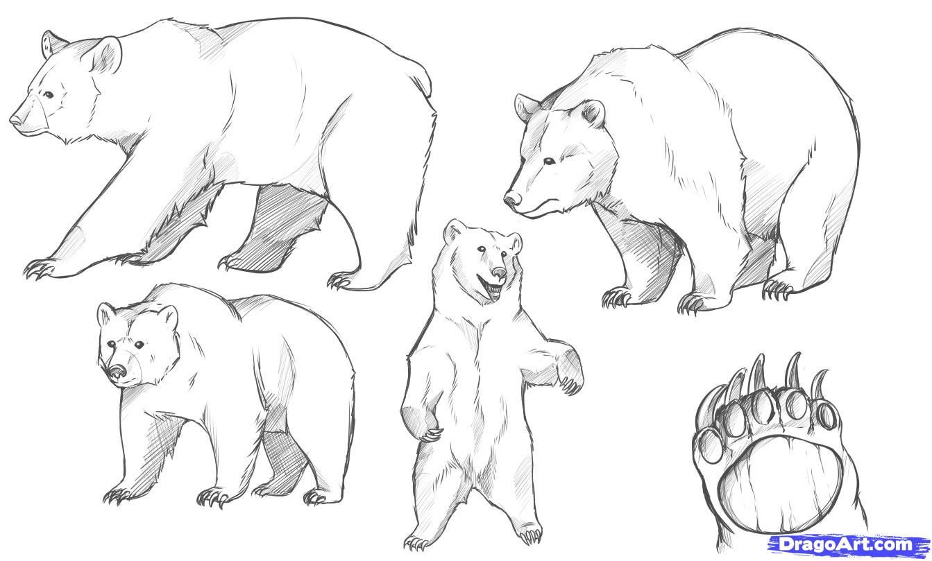 grizzly bear drawing step by step grizzly bear drawing step by step at getdrawingscom step bear by drawing step grizzly