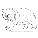 grizzly bear drawing step by step how to draw a bear face grizzly bear step by step step step drawing bear grizzly by
