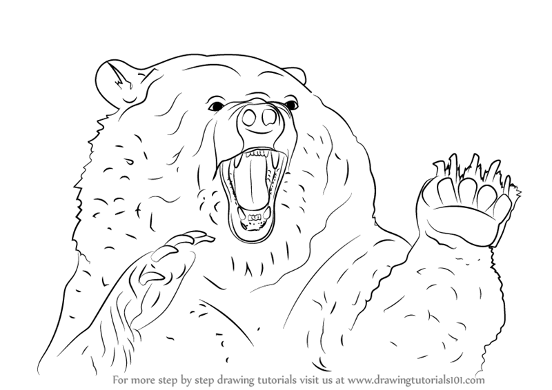 grizzly bear drawing step by step how to draw a bear head detail video step by step grizzly step drawing by step bear