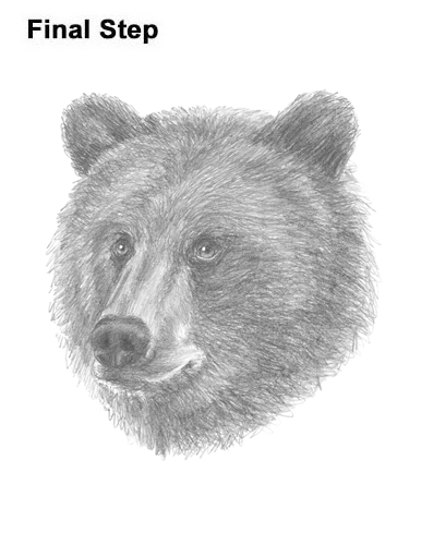 grizzly bear drawing step by step how to draw a grizzly bear growling by drawing bear step step grizzly