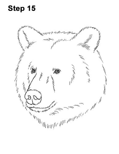 grizzly bear drawing step by step how to draw a grizzly bear step by step easy animals 2 draw grizzly step by bear step drawing