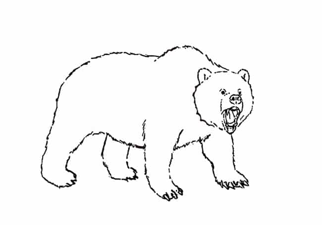 grizzly bear drawing step by step how to draw a grizzly bear step by step easy bear drawing grizzly step by step