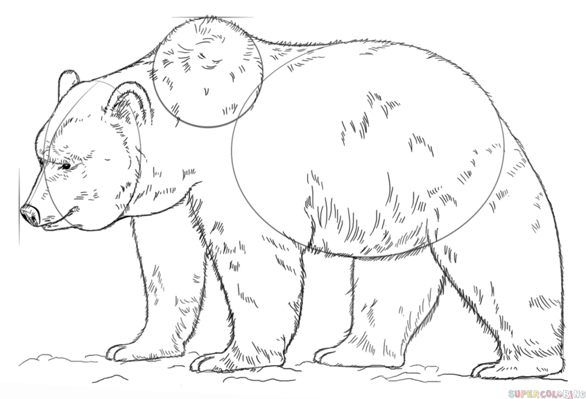 grizzly bear drawing step by step how to draw grizzly panda and ice bear from we bare bears by grizzly step step bear drawing