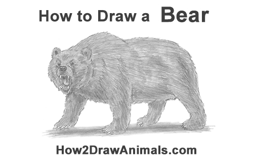 grizzly bear drawing step by step learn how to draw a grizzly bear bears step by step bear drawing step by step grizzly