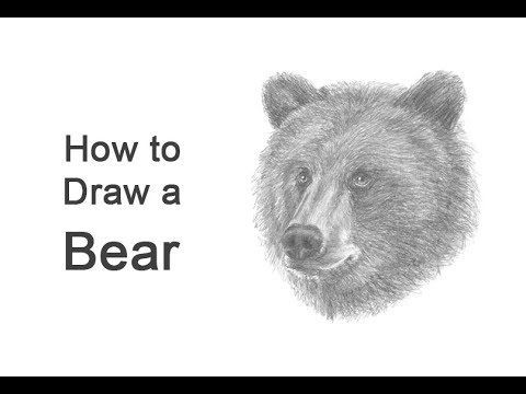 grizzly bear drawing step by step simple grizzly bear head drawing step drawing by step grizzly bear
