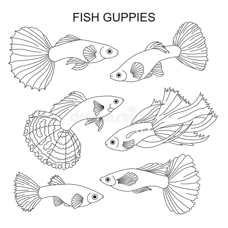 guppy fish coloring pages bubble mr guppies grouper coloring pages coloring guppy pages fish