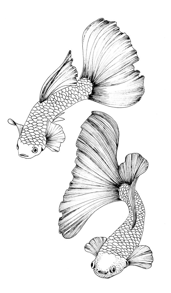 guppy fish coloring pages guppy coloring page free other fish coloring pages fish guppy pages coloring